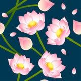 Pink Indian lotus on Indigo Blue Background. Stock Photos