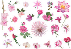 Pink isolated flowers set Stock Photos