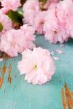 Pink Japanese Cherry blossom Stock Photos