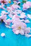 Pink Japanese cherry flowers Royalty Free Stock Photography
