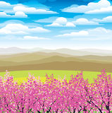 Pink japanese trees and mountains Royalty Free Stock Photography