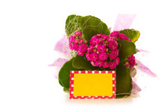 Pink kalanchoe flower. Royalty Free Stock Photography