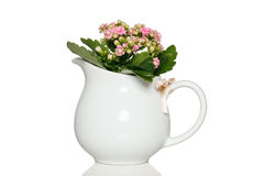 Pink kalanchoe flowers in white pot Stock Photo