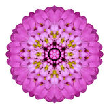 Pink Kaleidoscopic Flower Mandala  Isolated on White Stock Images