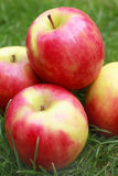 Pink lady apple Stock Photography
