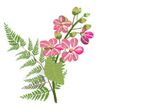 Pink lagerstroemia and fern on white background. Isolated picture Royalty Free Stock Photography