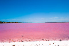 Pink Lake Australia Birds Stock Photos