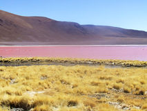 Pink lake. Landscape of the pink lake Royalty Free Stock Photography