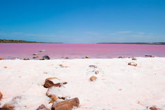 Pink Lake Panorama Australia Stock Photos
