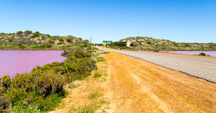 Pink lake Port Gregory royalty free stock photography