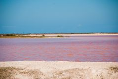 Pink lake. Striking red pool used in the production of salt near Rio Lagartos, Mexico, Yucatan.  Stock Photography