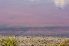 Pink lake in western Australia Stock Image