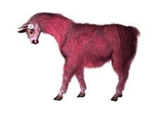 Pink Lama on White Stock Photos