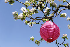 Pink lampion Royalty Free Stock Images