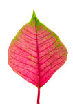 Pink leaf Royalty Free Stock Images