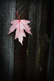 Pink Leaf with a Gray Fence Background Stock Images