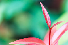 Pink leaf with green background. Royalty Free Stock Photo