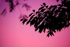 Pink, Leaf, Sky, Branch Royalty Free Stock Image