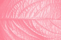 Pink Leaf Texture Royalty Free Stock Photos