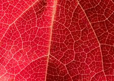 Pink leaf texture stock photo