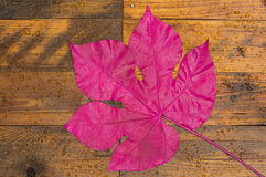 A pink leaf. On the wet wooden floor after the rain Stock Photo