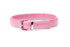Pink leather collar Royalty Free Stock Photos