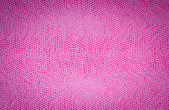 Pink leather texture. Texture composed by a pink snake leather Royalty Free Stock Image