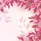 Pink  leaves border. Pink leaves border over blured background Stock Photography