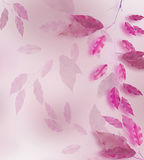 Pink leaves frame. Pink leaves border over blured background Stock Images