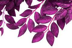 Pink leaves isolated Royalty Free Stock Image