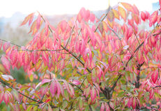 Pink leaves Royalty Free Stock Photo