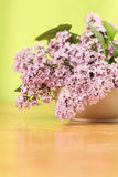 Pink lilac Stock Photos