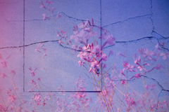 Pink lilac background surface, photomontage of wall, hatch and f. Lowers Royalty Free Stock Image