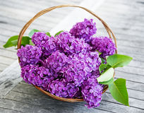 Pink lilac in a basket on an old table Stock Image