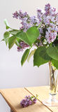 Pink lilac bouquet Stock Photo