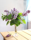 Pink lilac bouquet in vase Stock Photo