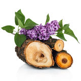 Pink lilac branch on firewood, isolated on white Stock Image