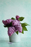 Pink lilac Stock Photo