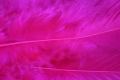 Pink feathers Stock Images