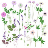 Pink and Lilac Flowers Set Royalty Free Stock Images