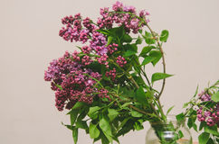 Pink Lilac Royalty Free Stock Photo