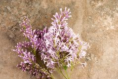Pink Lilac Vintage Background Royalty Free Stock Photos