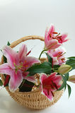 Pink Lilies. A bouquet of beautiful pink lilies in the wicker basket Royalty Free Stock Photography