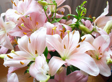 Pink lilies. A bunch of pink lilies Stock Photography