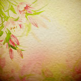 Pink lilies background Royalty Free Stock Images
