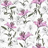 Pink lilies and contour lilies on a white background, vector, seamless pattern stock images
