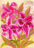 Pink lilies. Hand painted picture, watercolours Stock Photos