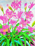 Pink daily lilies Stock Photo