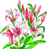 Pink lilies, painting Royalty Free Stock Photos