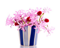 Pink lilies and red Nerine Rose Royalty Free Stock Photo